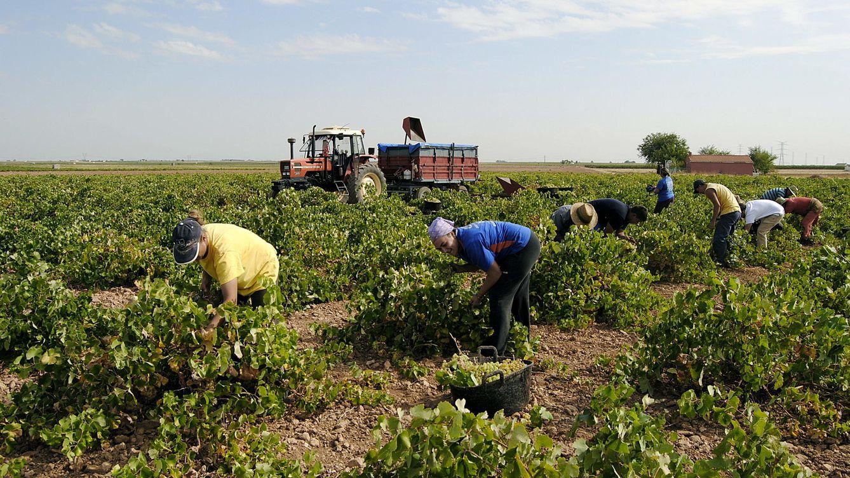 La Audiencia investiga a cuatro bodegas de Valdepeñas por posible estafa en sus vinos