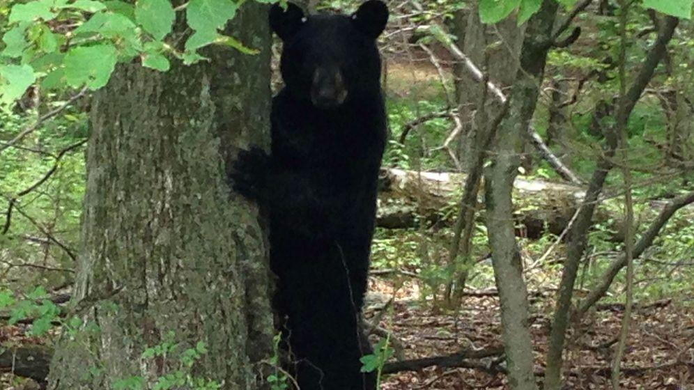 Foto: Los osos negros abundan en los bosques del condado de Craven, donde se perdió el pequeño (Reuters/Barbara Goldberg)