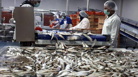 Qué perderá España si el acuerdo pesquero entre Marruecos y la UE se va al traste