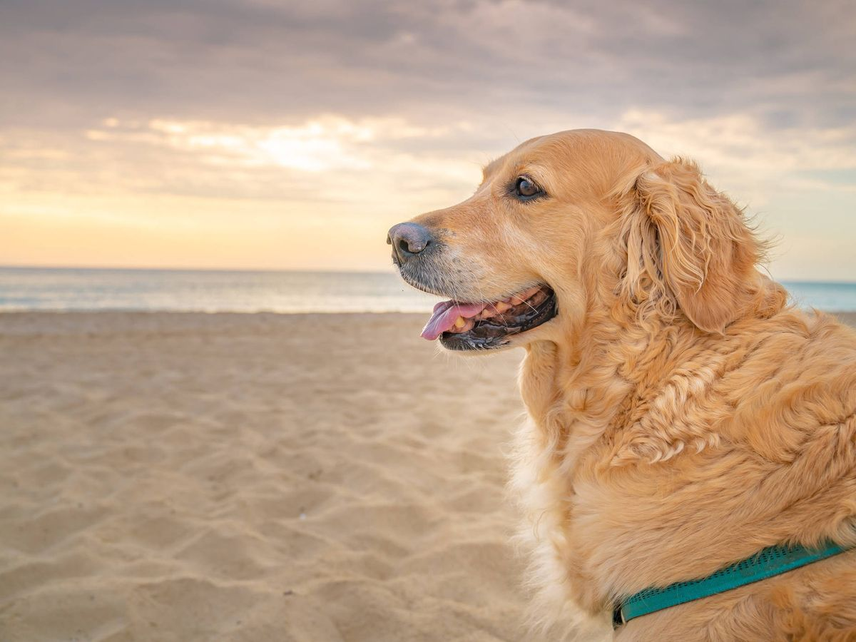 Foto: Un perro disfruta de la playa. (iStock)