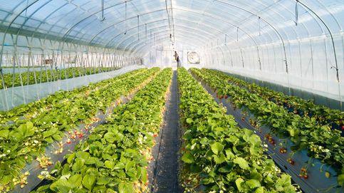 Plástico y hortalizas: cómo abastecer a Europa en una crisis sanitaria