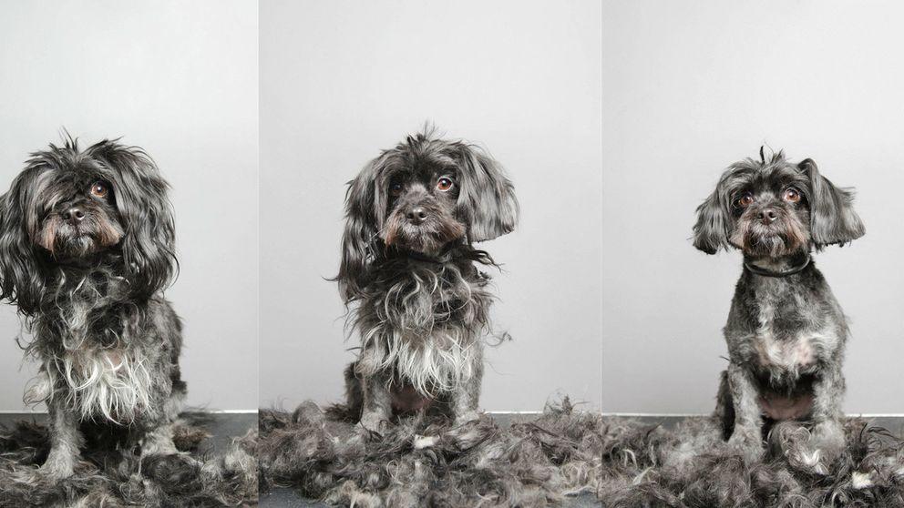 Cómo bañar a tu perro sin dramas