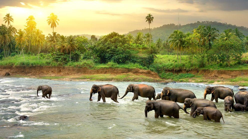 El polémico acertijo sobre los animales que van al río (y su verdadera solución)