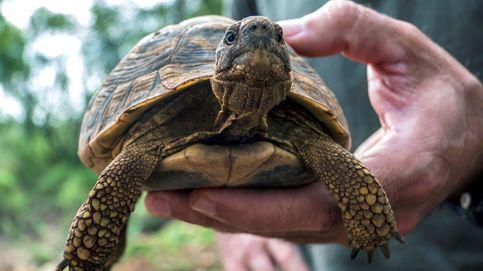 Cae una red de contrabando de tortugas en Colombia