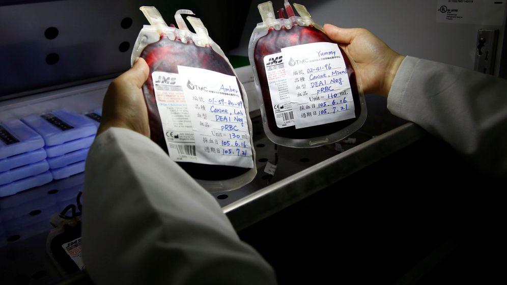 Foto: Bolsas de sangre de perro en la Universidad de Ciencia y Tecnología de Pingtung. (Reuters)