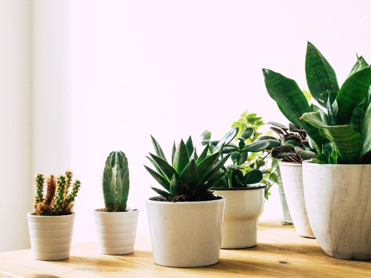 Foto: Decora tu casa con plantas y estos maceteros. (Cortesía)