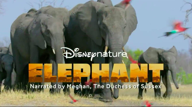 Trailer del documental 'Elephant'. (Disney Nature)