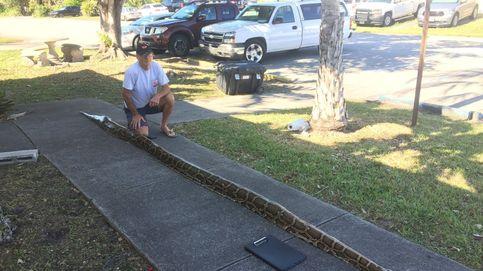 La Python Bowl: así es la competición de cazar serpientes birmanas