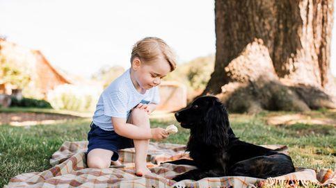 La 'otra' familia de los Cambridge que no conoces: sus mascotas