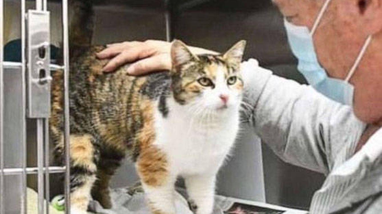 Un hombre encuentra milagrosamente a su gato desaparecido hace tres años en un alud