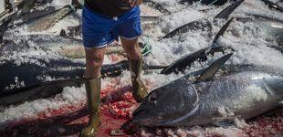 Post de Malta destituye a su jefa de Pesca por cobrar de la red española de atún ilegal