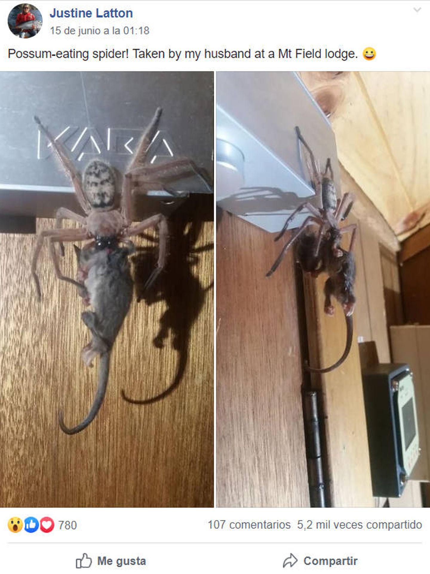 Justine Latton compartió las fotos en Facebook con un grupo australiano de insectos y arañas