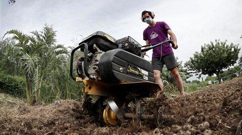 El Gobierno prorroga hasta el 30 de septiembre las medidas de empleo agrario