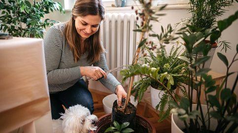 Plantas de interior que, aunque no lo creas, podrían hacer daño a tu perro