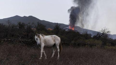 En La Palma no solo duele el volcán: cómo los desastres naturales están golpeando la isla