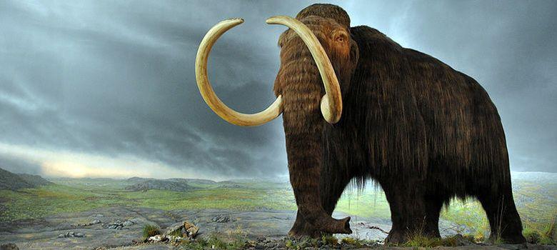Foto: ¿Clonación de mamuts? El 'padre' de Dolly apuesta por las células madre