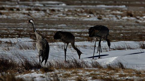 Vídeo: el canto de las grullas en la laguna de Gallocanta