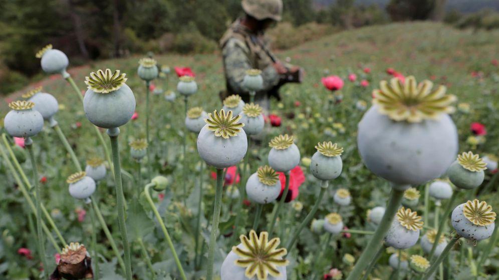 Foto: Un soldado monta guardia en un cultivo ilegal de amapola durante una operación antidroga en Coyuca de Catalán, en abril de 2017. (Reuters)
