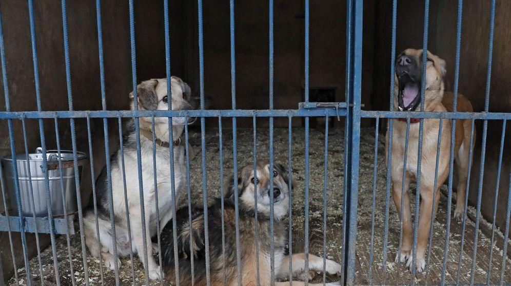 Foto: Seúl quiere acabar con los mataderos de perros en la ciudad (EFE EPA/Yuri Kochetkov)