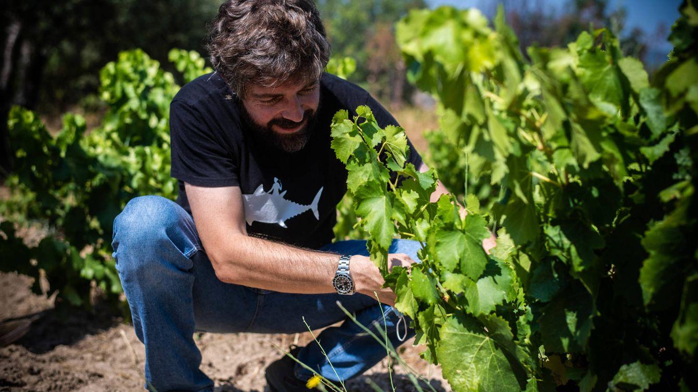 Foto: Juan Diez revisa una vid a poco más de 10 días para que su bodega empiece a vendimiar. (Foto: Carmen Castellón)