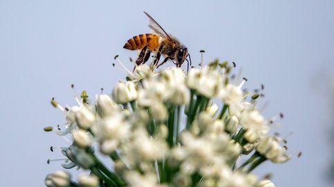 Muere un hombre al tragarse una abeja mientras iba en bicicleta