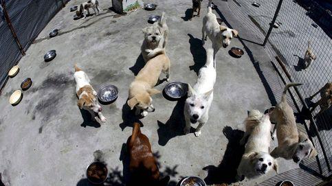 La UCM organiza clases gratuitas de educación canina
