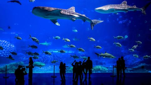 Un acuario gigante entre Macao y Hong Kong