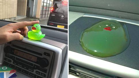 El misterio del pato derretido (¿o montaje fotográfico?) que trae loco a internet