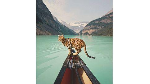 Esta es Suki, la gata viajera que está revolucionando Instagram