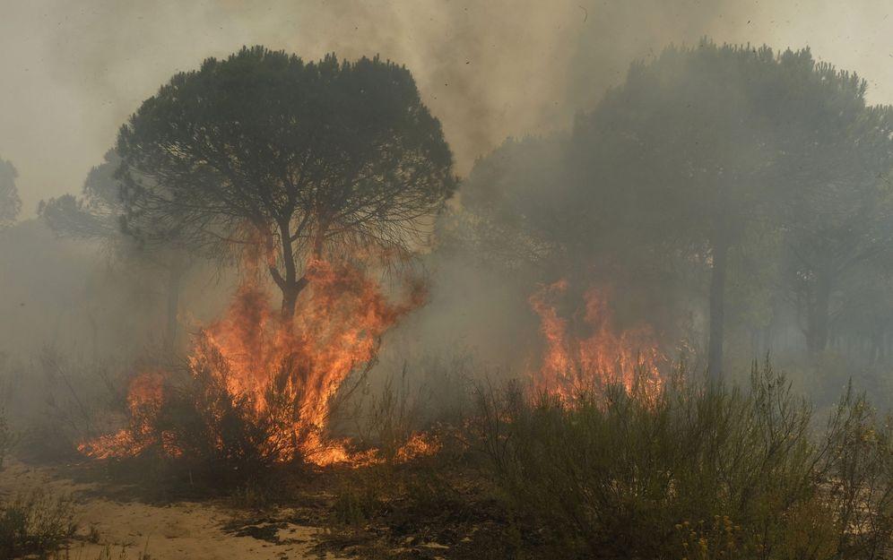 Foto: Más de 260 efectivos por tierra y 20 medios aéreos trabajan en extinguir el fuego en las inmediaciones del Parque Nacional de Doñana. (EFE)