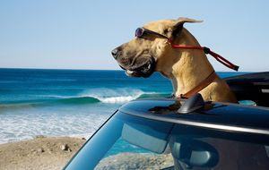 Vacaciones con tu perro