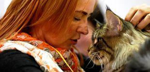 Post de Así se debe acariciar a un gato (según la ciencia) para que de verdad le guste