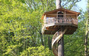 Anida en lo más alto: los hoteles se suben a los árboles