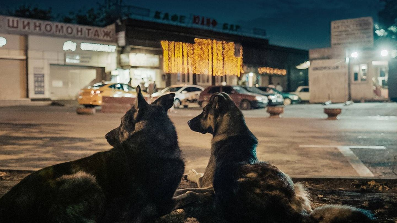 Elsa Kremser y Levin Peter dirigen 'Space Dogs'. (Filmin)