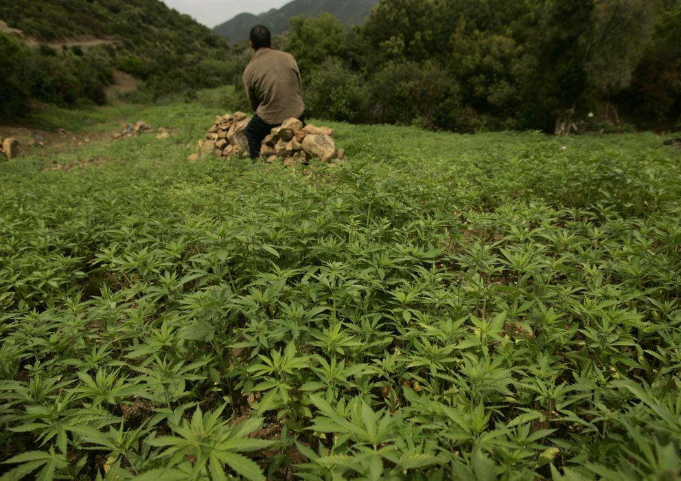 Foto: Un agricultor en medio de su plantación de cannabis cerca de Chefchauen, en las montañas del Rif (Reuters).