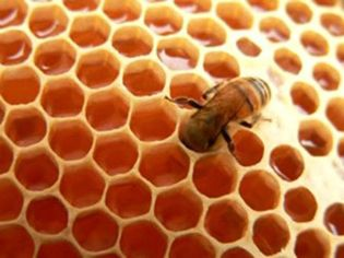 Foto: La miel es el mejor remedio para la tos de los niños
