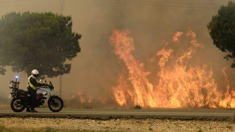 Agentes del Seprona de Madrid trabajan en el terreno para estudiar el origen del fuego