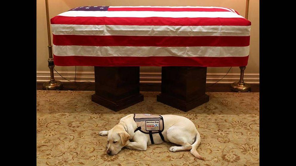 El perro guía de George Bush también lo acompañará en su último viaje
