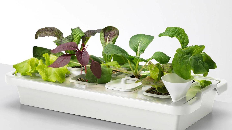 Tus plantas crecerán fuertes gracias a estas bandejas de Ikea. (Cortesía)