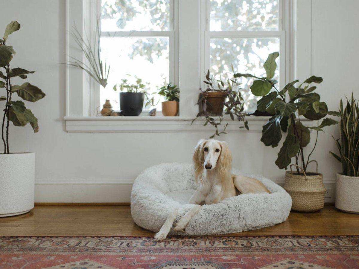 Foto: Plantas de interior 'pet friendly' que decoran y cuidan de tus mascotas (Chewy para Unsplash)