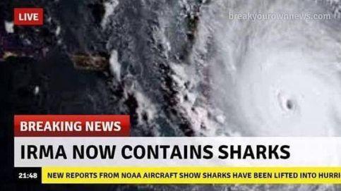 No, el huracán Irma no está arrastrando y haciendo volar a los tiburones del Atlántico