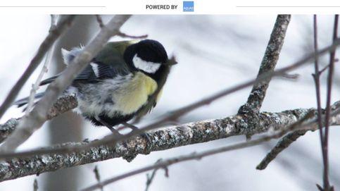 El pájaro más espabilado del parque que se atreve a comer de tu mano