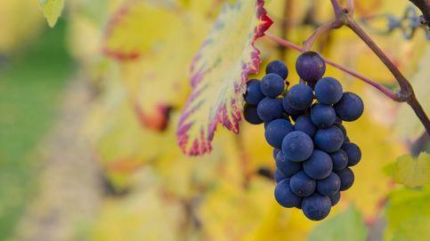 ¿Supondrá el cambio climático el fin del vino español?