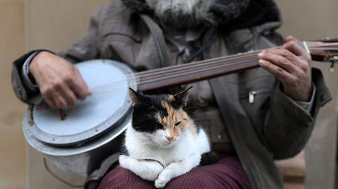 Estambul, la ciudad de los gatos