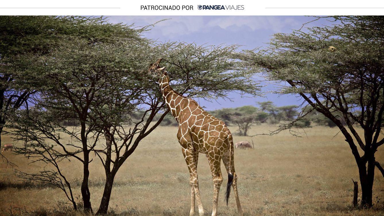 Viaje a Kenia: fotografía de naturaleza como 'excusa' para conocer los orígenes