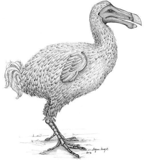 Científicos responden a un enigma histórico: ¿De qué color era realmente el dodo?