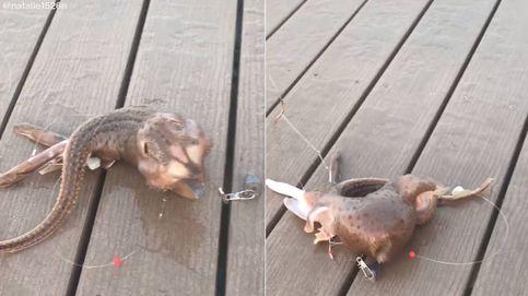 Pescan una criatura extraña en Nueva York y el vídeo arrasa en Tik Tok
