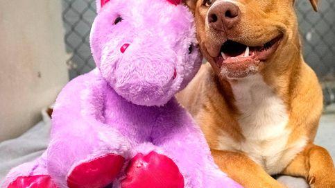 Un perro trata de robar 5 veces un juguete de una tienda hasta que se lo compraron