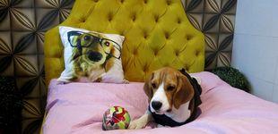 Post de Cinco razones científicas por las que debes dejar dormir a tu perro en tu cama