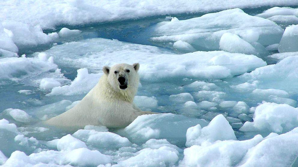 Google cierra el grifo a los que niegan el cambio climático